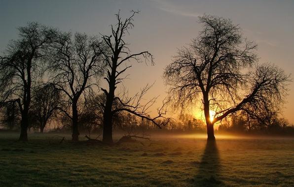 Картинка туман, дерево, утро