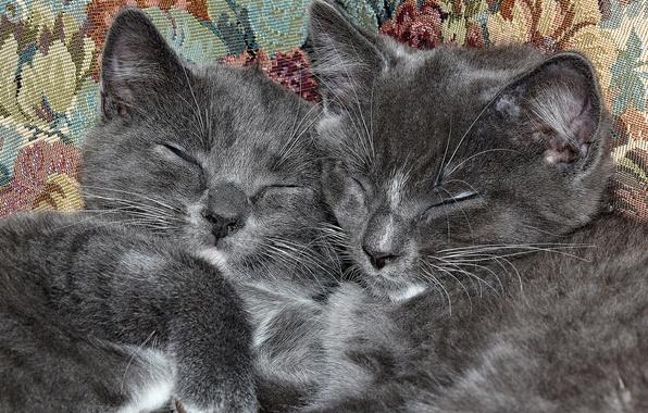 Картинка сон, пара, котята, котики