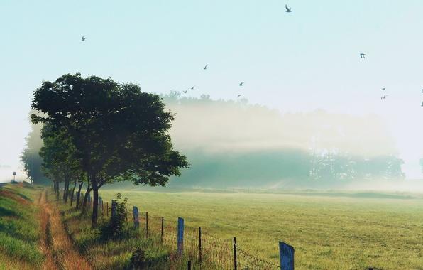 Картинка небо, трава, птицы, природа, туман, роса, забор, утро, обочина