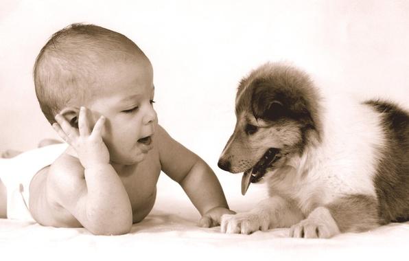 Картинка дети, ребенок, малыш, Песик