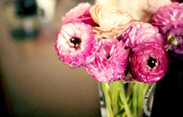 Картинка листья, цветы, букет, лепестки, ваза, розовые, бутоны, лютики, ranunculus