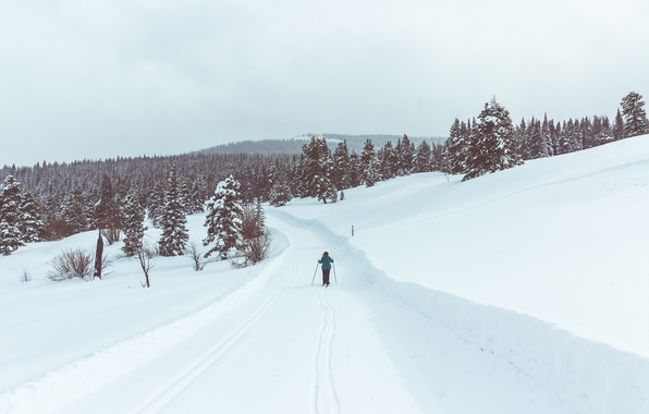 Картинка road, winter, person, ski, pine, skiing, snowing