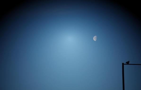 Картинка небо, птица, луна
