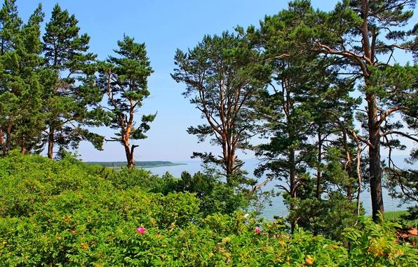 Картинка море, небо, деревья, пейзаж, цветы, сосны, балтика, литва, nida, взморье
