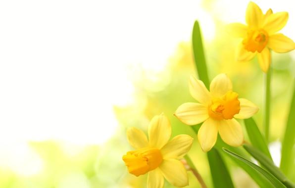 Картинка цветы, букет, petals
