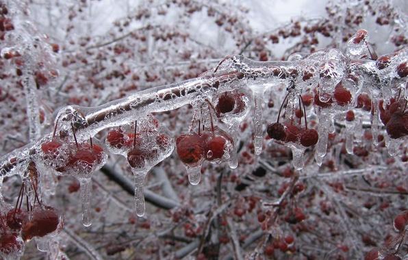 Картинка лед, зима, вишни