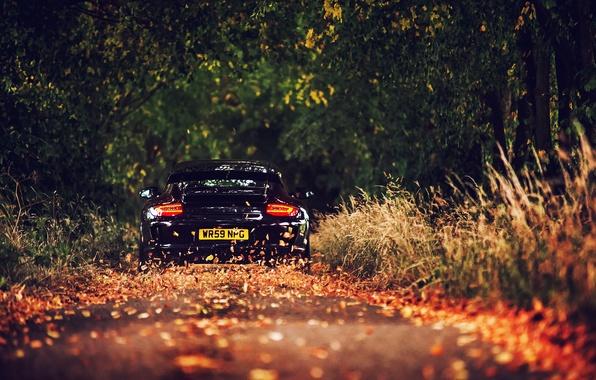 Картинка дорога, листва, Porsche, чёрная, GT3