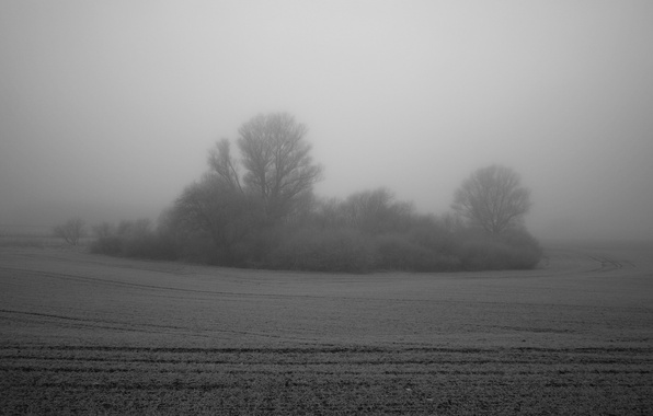 Картинка поле, туман, дерево, куст