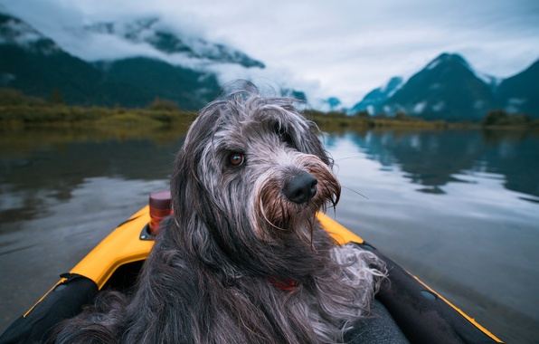 Картинка взгляд, облака, пейзаж, горы, природа, озеро, лодка, собака