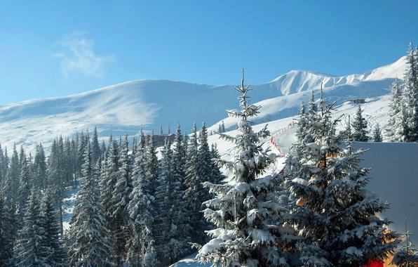 Картинка зима, снег, горы, ели, Украина, Карпаты, горнолыжный курорт, Буковель