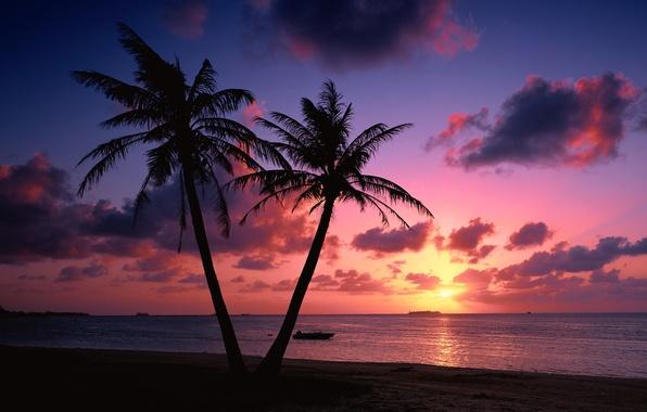 Картинка море, пляж, облака, закат, пальмы, побережье, пейзажи, вечер, landscape