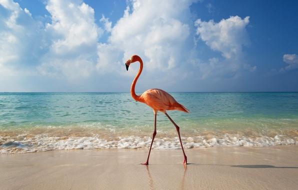 Картинки птицы и природа