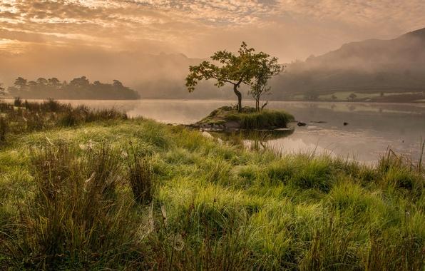 Картинка трава, деревья, горы, туман, озеро, Англия, утро