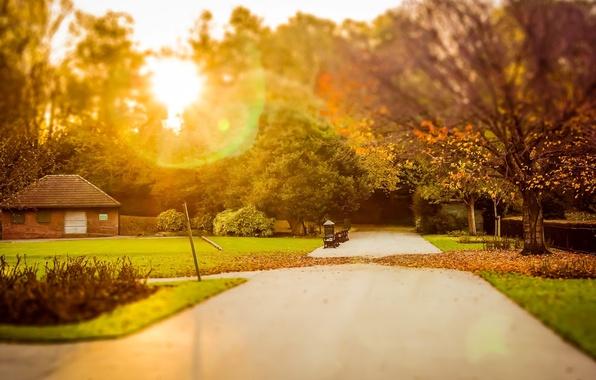 Картинка зелень, осень, трава, листья, солнце, лучи, деревья, природа, дом, фон, дерево, обои, листва, размытие, wallpaper, ...