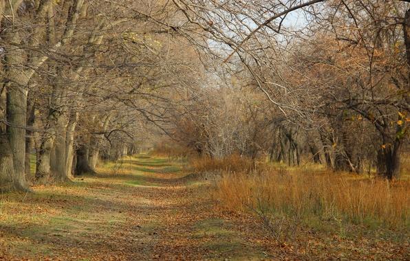 Картинка листья, деревья, ветки, Осень, тропинка, голая осень