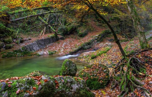 Картинка осень, листья, вода, деревья, озеро, река, камни, мох