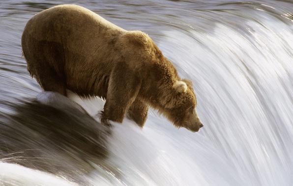 Картинка река, рыбалка, медведь