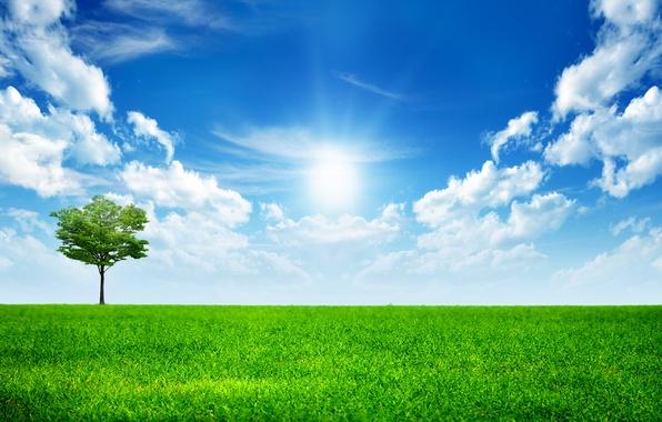 Картинка небо, трава, облака, дерево, green, grass, sky, trees, landscape, All Alone In This World, the …