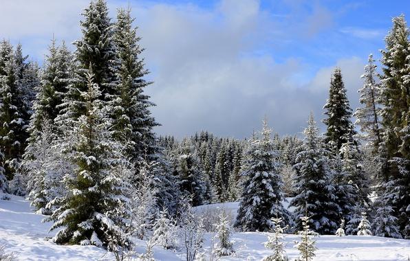 Картинка зима, лес, небо, облака, снег, деревья, ели, сугробы, Урал, Росия