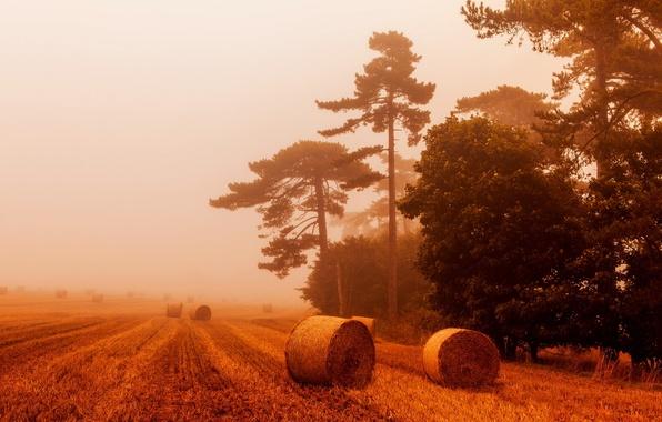 Картинка пшеница, поле, небо, пейзаж, природа, туман, вид, тюки, солома, sky, field, landscape, nature, view, fog, …