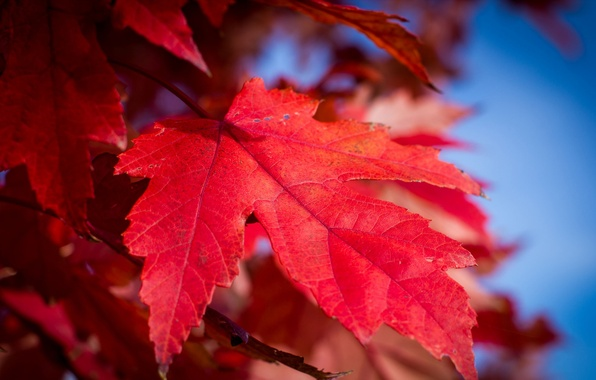 Картинка осень, небо, природа, лист, краски, багрянец