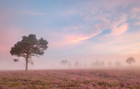 Картинка поле, лето, туман, утро