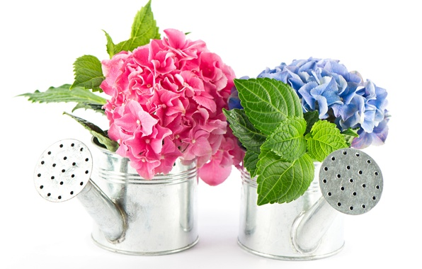Названия комнатных цветов каталог комнатных цветов с фото