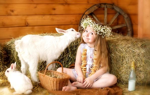 Картинка животные, счастье, детство, корзина, яйца, колесо, кролик, молоко, сено, девочка, малыши, венок, сушки, мимика, козленок, …