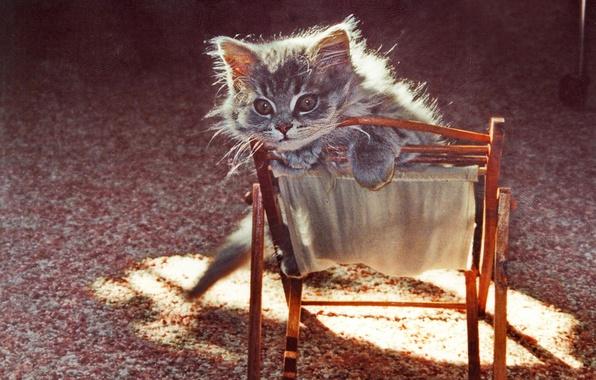 Картинка текстура, котёнок, стульчик