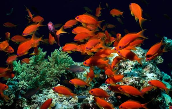 Фото подводный мир рыбки красные