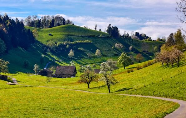 Картинка трава, деревья, горы, дом, холмы, весна, дорожка, цветение