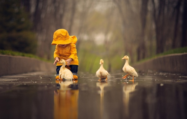 Картинка вода, птицы, лужа, малыш, ребёнок, птенцы, гусята