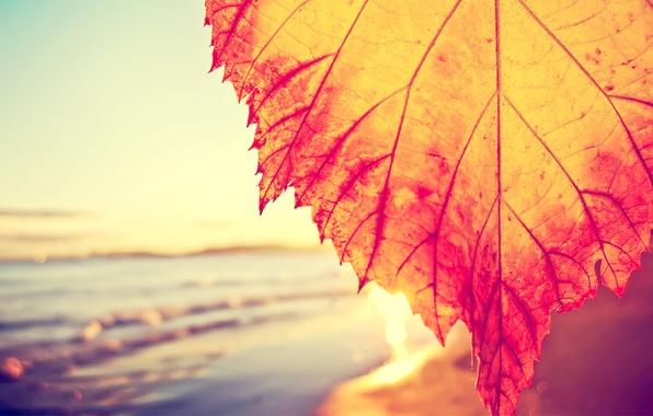 Картинка море, волны, небо, вода, макро, листок, waves, sunshine, sky, sea, water, macro, 2560x1600, солнечный свет, …