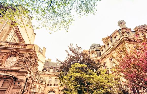 Картинка деревья, природа, город, Франция, Париж, здания, дома, весна, Paris, архитектура, цветение, France