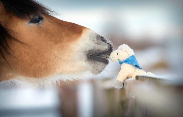 Картинка зима, природа, доброта, лошадь, нежность, игрушка, забор, размытость, animals, nature, фигурка, боке, сувенир, horse, лошадка, …