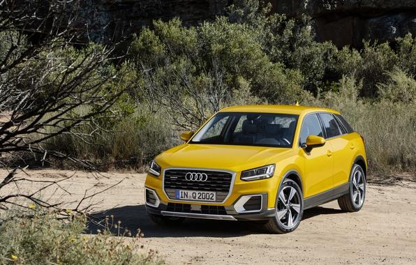 Картинка Audi, ауди, кроссовер