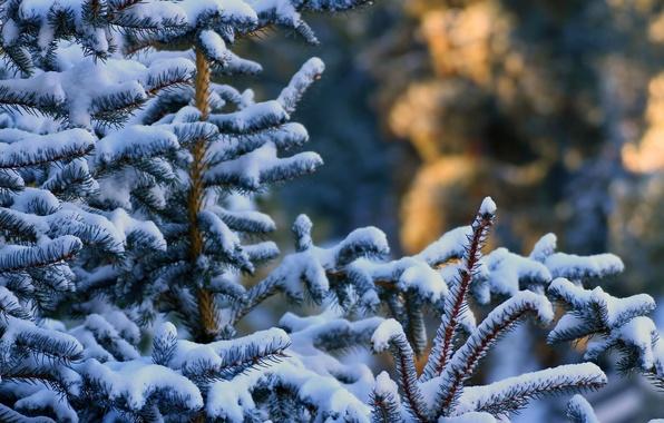 Картинка зима, лес, снег, иголки, ветки, елка