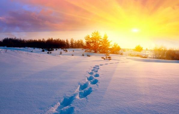 Картинка холод, зима, поле, небо, солнце, снег, деревья, закат, следы, природа