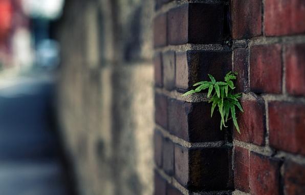 Картинка green, wall, plant, brick