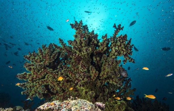 Картинка поверхность, рыба, морское дно, риф, солнечный свет, коралл