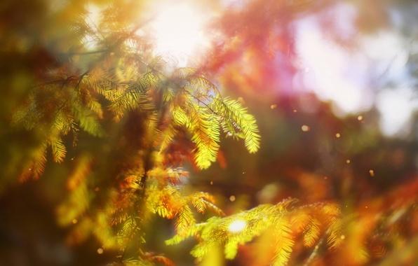 Картинка Autumn, Bokeh, Trees, October Rhapsody