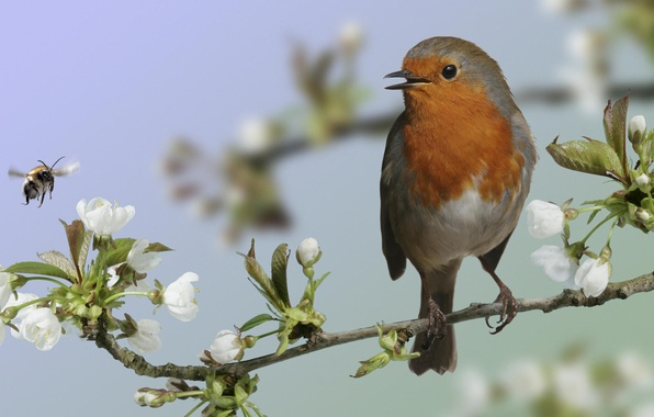 Картинка макро, птица, ветка, цветение, bird