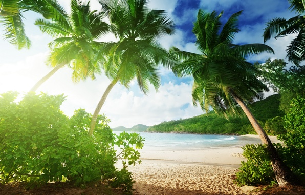 Картинка песок, море, пляж, лето, пальмы, summer, beach, sea, sand, paradise, vacation, palms, tropical