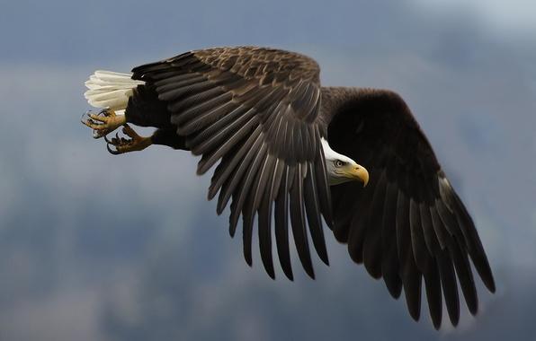 Фото обои крыло, взгляд, орел