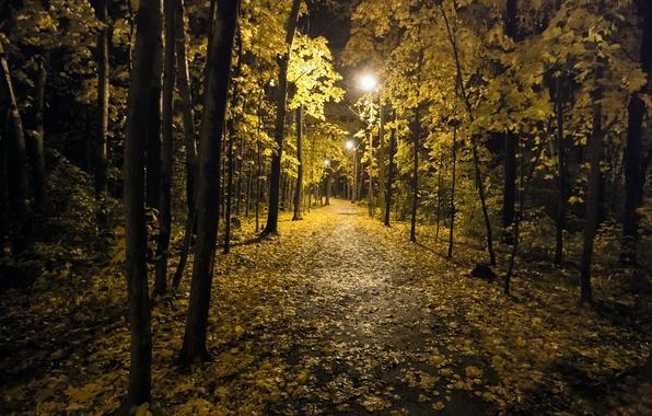 Картинка осень, ночь, город, парк