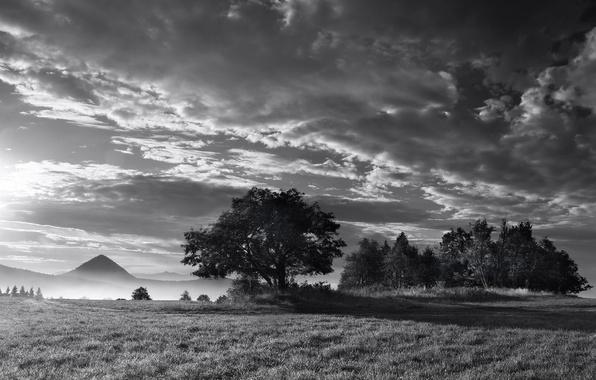 Картинка туман, дерево, Черно-белая