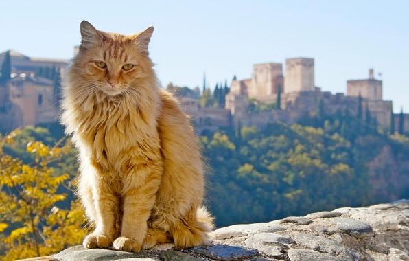 Картинка кот, рыжий, Испания, Spain, Андалусия, Andalusia, Гранада, Granada