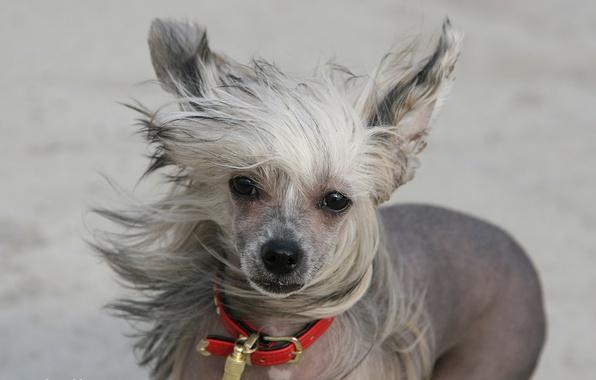 Картинка взгляд, друг, ветер, собака