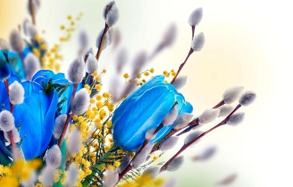 фото весна верба