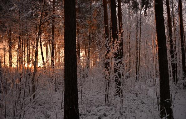 Картинка зима, иней, лес, снег, деревья, закат